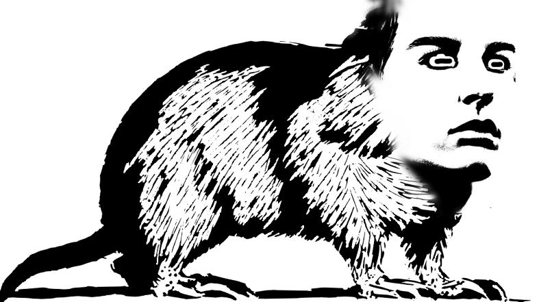 Strange Rat