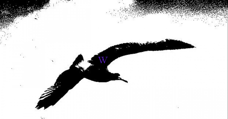 Bird 1 Diving.png