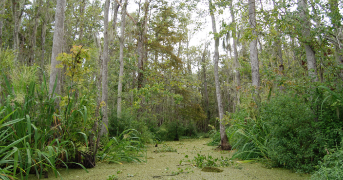 Honey Island Swamp.png