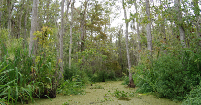 Honey Island Swamp.png