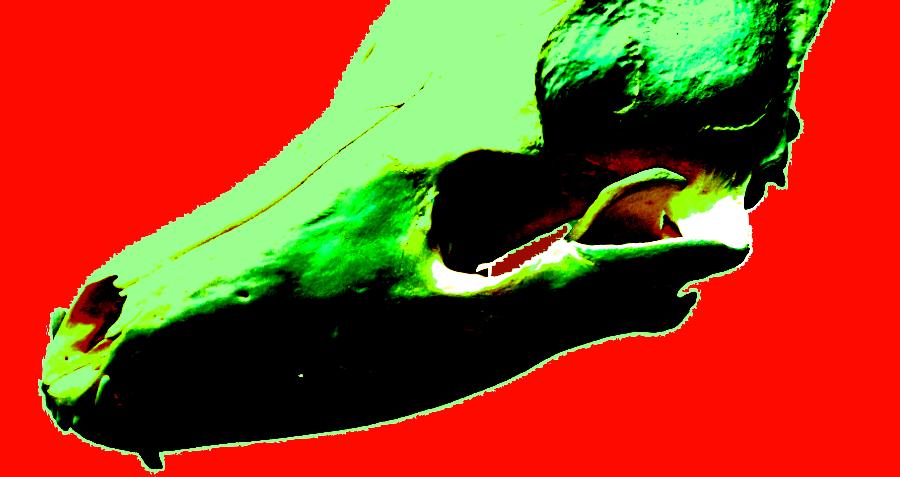Demeneted Wolf Skull