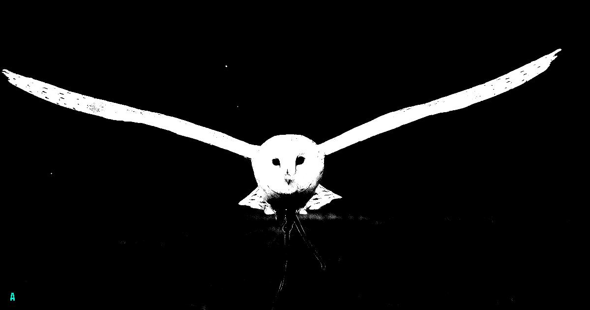 Bird of Pray 1