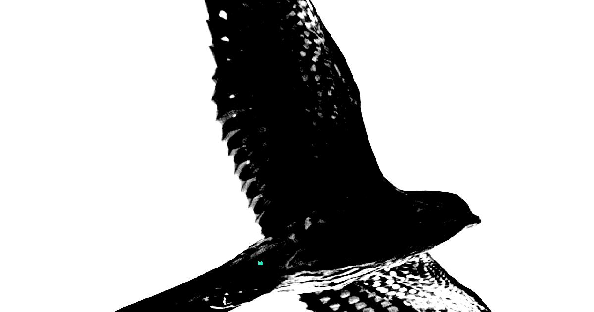 Bird of Pray 2