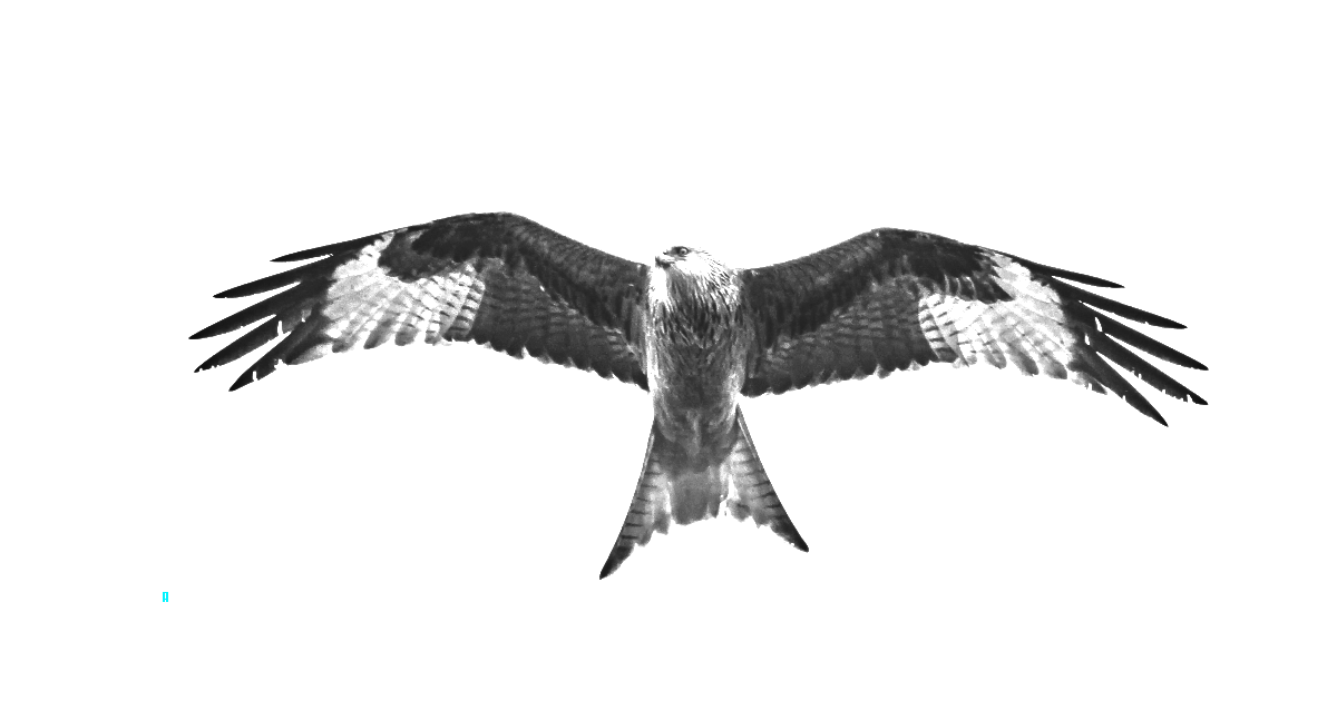 Bird of Pray 3