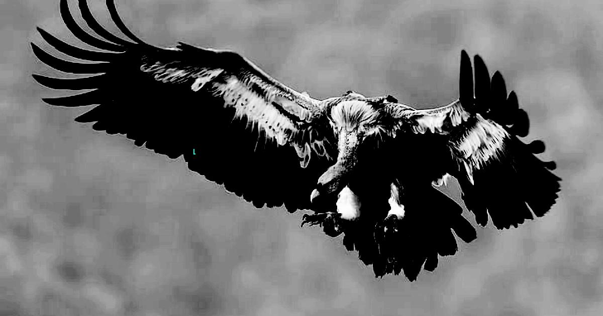 Bird of Pray 4