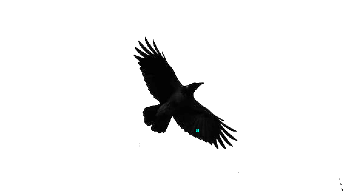 Bird of Pray 5